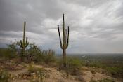 Arizona Images