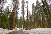 Sequoia National Forest Images