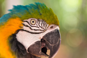 Jungle Island Images