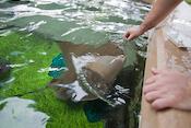SeaWorld Images