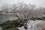 Ice Storm Images